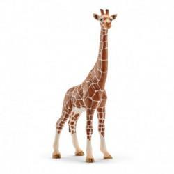 Girafe femelle