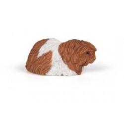 PAPO - LA VIE SAUVAGE - Cochon d'Inde