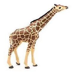 PAPO - LA VIE SAUVAGE - Girafe tête levée